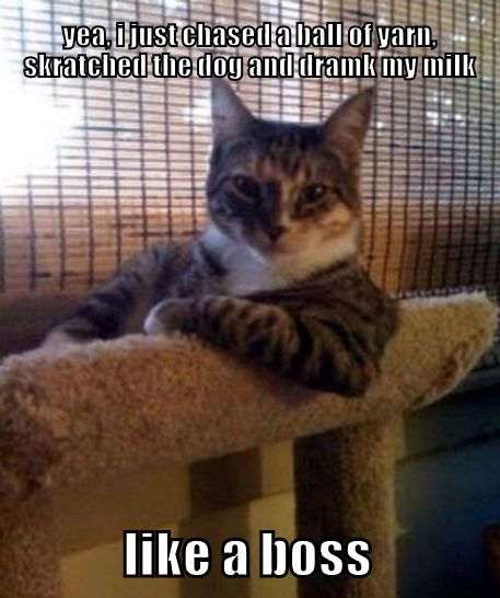 fc525a9b563dc19d504e70c2fc4cb808 funny animal memes animal quotes 73 best funny animal memes images on pinterest animals, funny,Hilarious Animal Memes