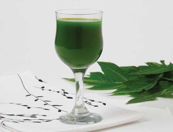 resep jamu daun pepaya