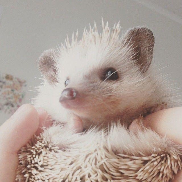 #trufa #hedgehog #erizodetierra