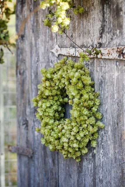 hops wreath...love it. just can't grown them well here in the south.