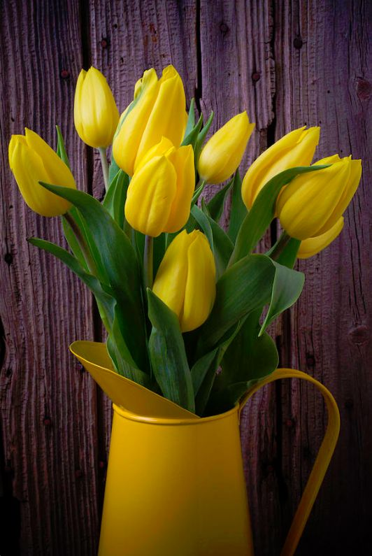 Yellow Tulips In Yellow Pitcher by Garry Gay