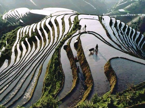 Rice Fields -- Taihu, China #HipmunkBL