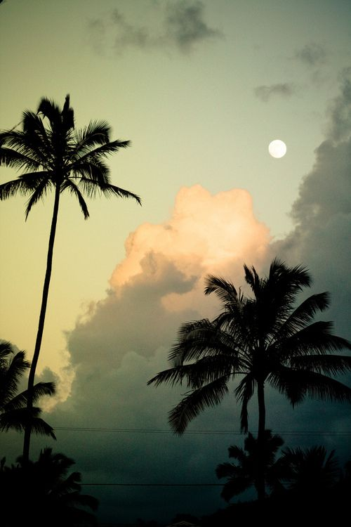 : Moon, Nature, Palmtrees, Beautiful, Palm Trees, Places, Beach, Photo, Palms