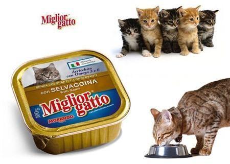 Miglior Gatto Av Hayvanlı Komple Kedi Maması