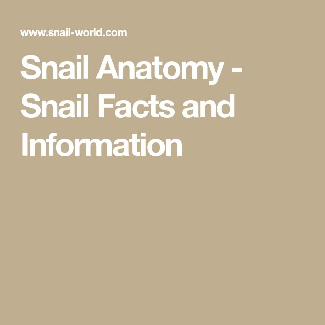 Snail Anatomy - Snail Facts and Information