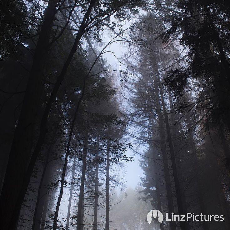 #herbst  . . . . . #autumn #urfahr #linz #igerslinz #mühlviertel #upperaustria #österreich #oberösterreich #happyface #igersaustria #linzer #wanderlust #hiking #draußen #landschaft #landscape #nature #gelb #streetsoflinz #noselfie #red #colors #view #linzpictures #fesch #fog #foggy . . # @linzpictures . . .  @linz_live @wettermax @wetteronline @wetter.at @mr_wetter