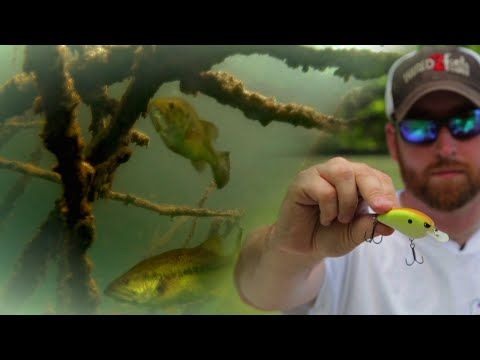 Bass Fishing Shallow Lead-in Banks with Crankbaits - YouTube