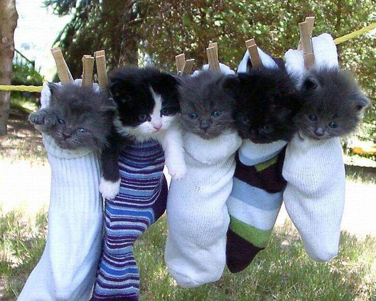 Даже котёнок знает своё место #Прикольное видео про кошек #Приколы с кошками #Funny cats  https://youtu.be/kqu3L2OG7WU