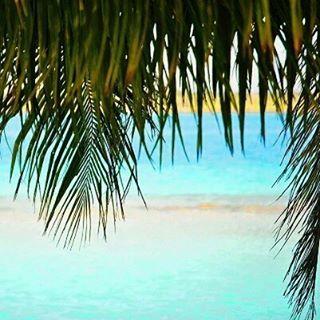 What are your plans for the long weekend friends? 🌴  @locacomocabra  #palmtrees #tropics #goals #paradise #beachlife #blue #palmtree #minimal #sky #tones #summer #welltravelled #fomo #views #wanderlust #beach #water #ocean #summervibes #goodvibes #travel #sun #beautiful #fun #love #moodygrams #instagood #tropical #islandlife #gameoftones