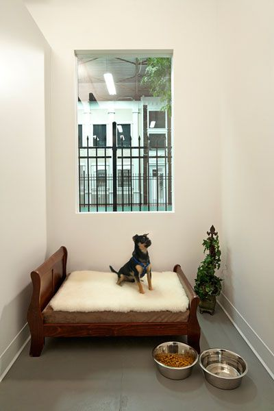 Jet Pet Resort - The Ultimate Pet Friendly Hotel at Affordable Cost | Dog Friendly Hotels in Vancouver | Dog Boarding & Grooming