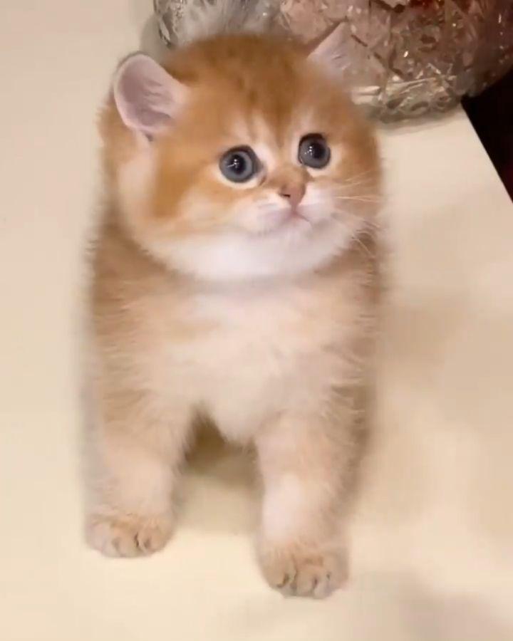 قط قطة قطط قطتي بسة بساس كاتي Cat حيوانات أليفة اليفة وردي كيوت Cats بيكي ف Cats Animals Cat Outline Cats