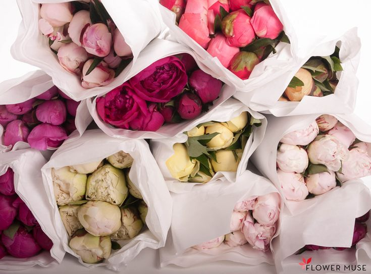 "Peony delivery! From Flower Muse blog post ""Peonies, Peonies and STILL More Peonies!"""
