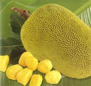 Jackfruit for weight loss, cancer, high blood pressure, skin disease, sleeplessness, ulcer, anxiety and loss of memory