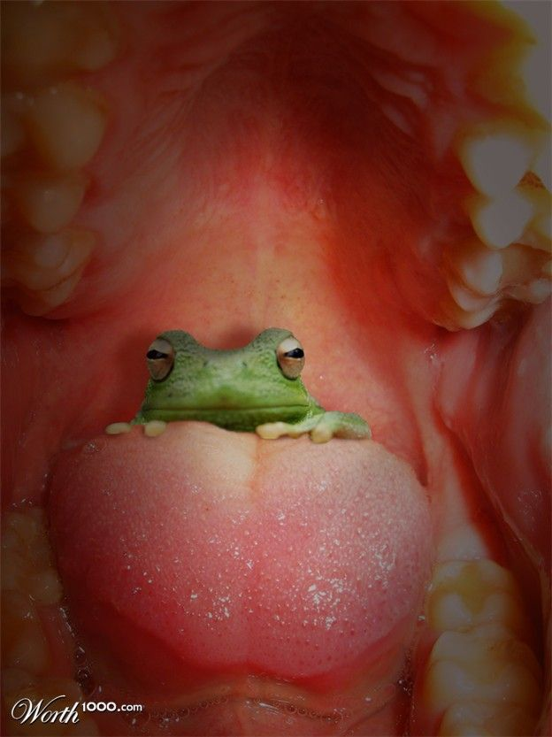 inflating-frog-throat-pictures