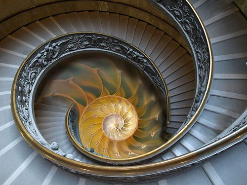 fibonacci sequence in architecture - Google Search