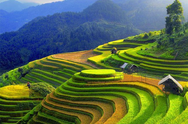 Les rizières en terrasse de Mu Cang Chai - Yen Bai Vietnam