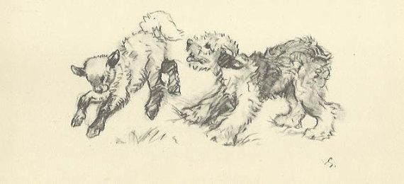 Old English Sheepdog and Sheep Lamb by Vernon Stokes 1944 antique dog print…