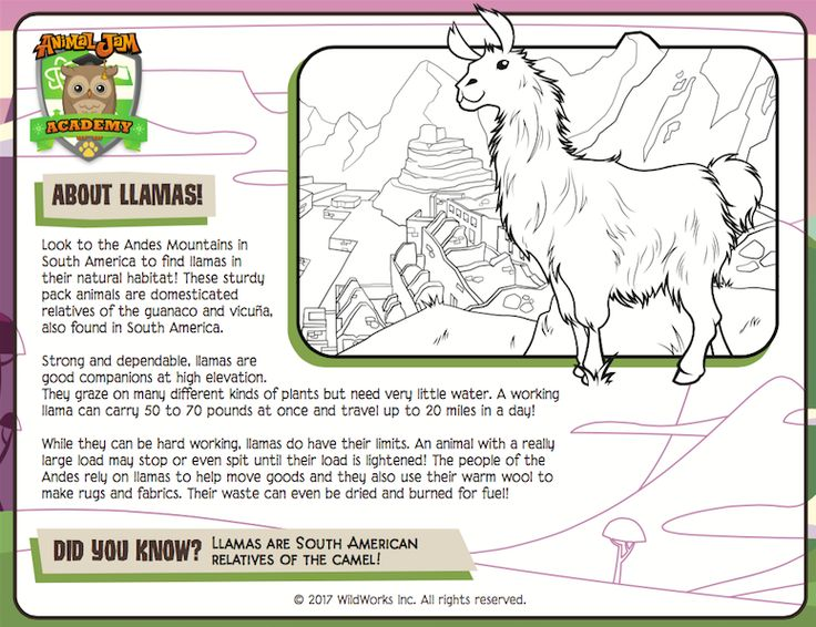 Did you know that llamas can travel up to 20 miles a day? Learn more cool llama facts and celebrate the return of llamas with a brand new Creature Feature coloring page! Free to download from Animal Jam Academy! Keep exploring and PLAY WILD!