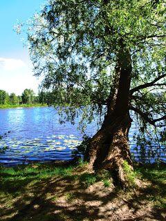 Matkojeni blogi: Hämeenlinnan vehreät puut: Silmäkarkkia ja luonnon rauhaa