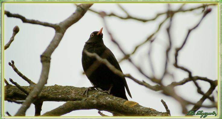 https://youtu.be/XqshXBZzFbc     - Brzeźno – Piękno przyrody –cz XXVII - 4k – Szpak – Trznadel