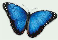 Butterfly Arc: I° Parco Nazionale delle Farfalle e Bosco delle Fate - Montegrotto Terme