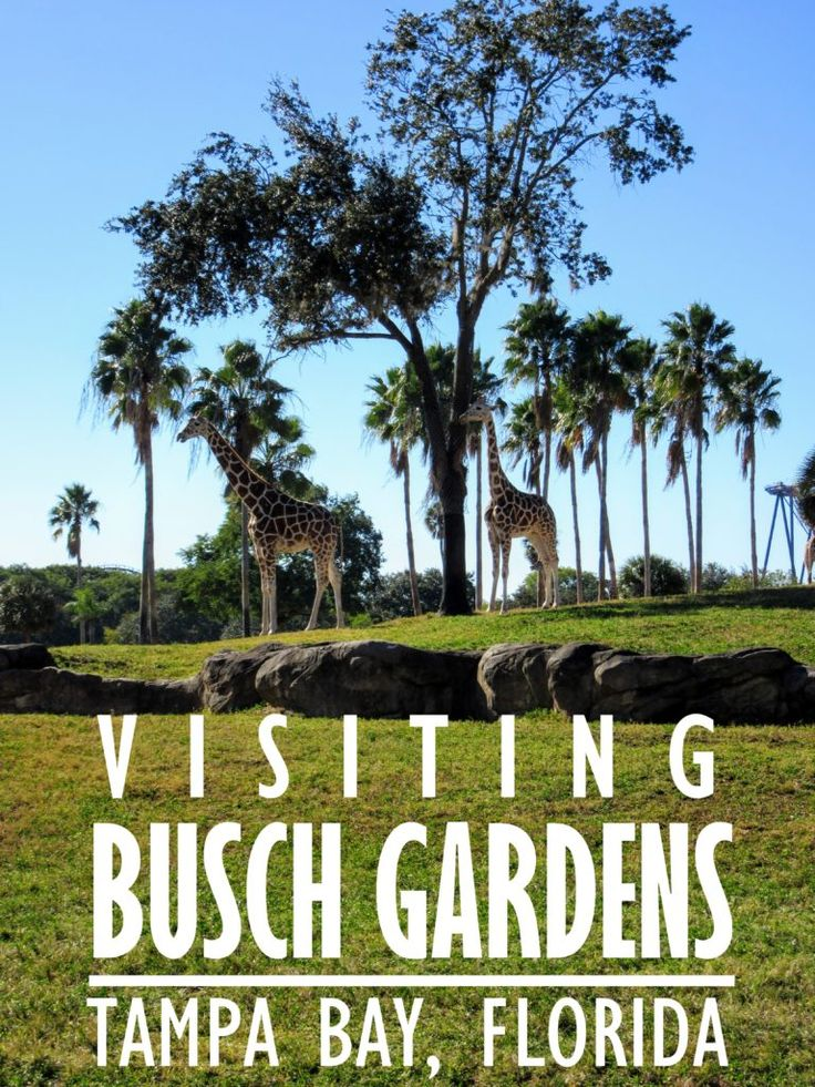 Visiting Busch Gardens Tampa Bay in Florida. | My Meena Life