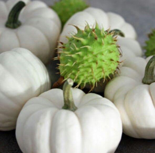 17 best ideas about s mereien on pinterest umpflanzen. Black Bedroom Furniture Sets. Home Design Ideas