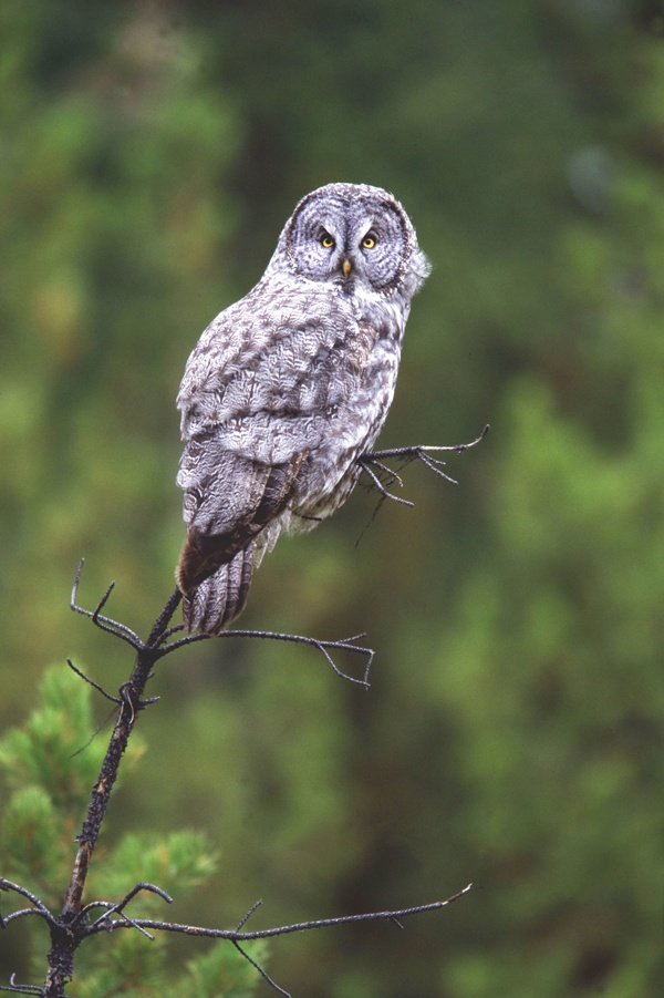 Nord Milano Park - A tawny owl #lombardy #parks http://lombardiaparchi.proedi.it/parchi-fluviali/parco-naturale-nord-milano/?lang=en