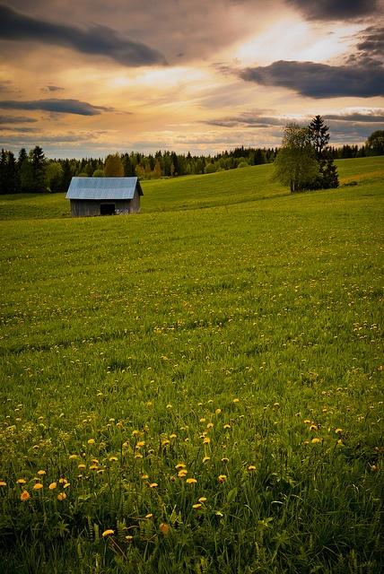 Jämtland, Meadow Meet by peter.lubeck, via Flickr