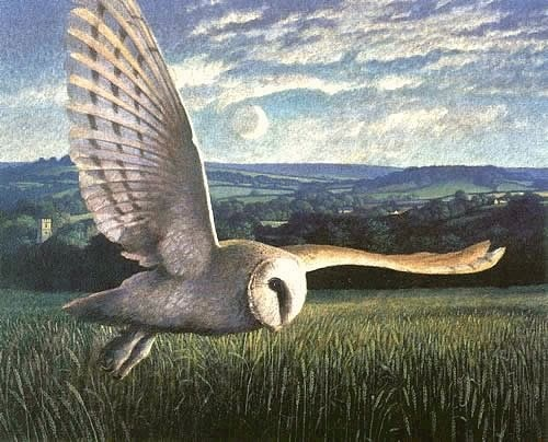 """Barn Owl Over Powerstock"" by James Lynch. www.james-lynch.co.uk"