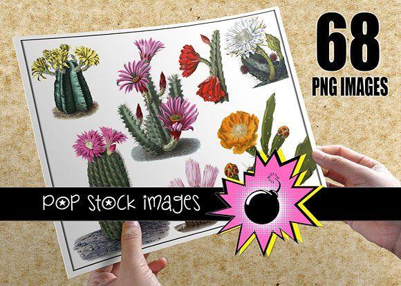 Desert Cactus Images - Asst Colors - Illustrations