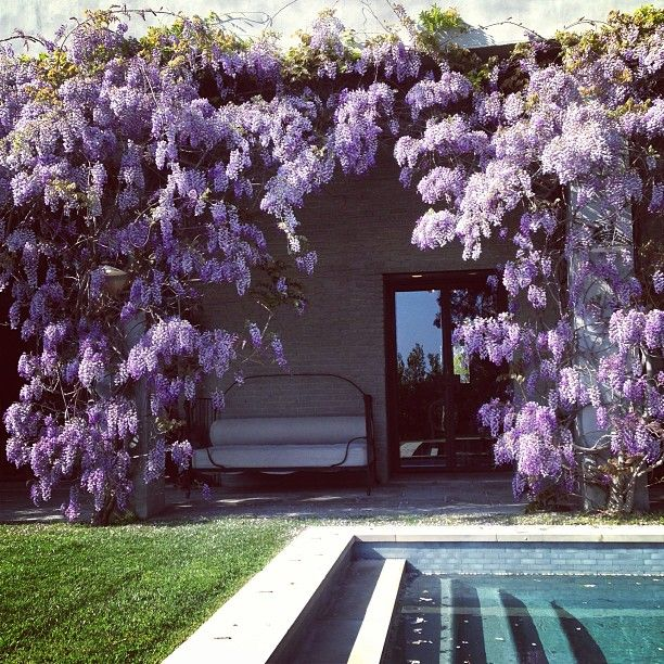 poolside wisteria. This would smell amazing when blooming and give great shade even when it's not.