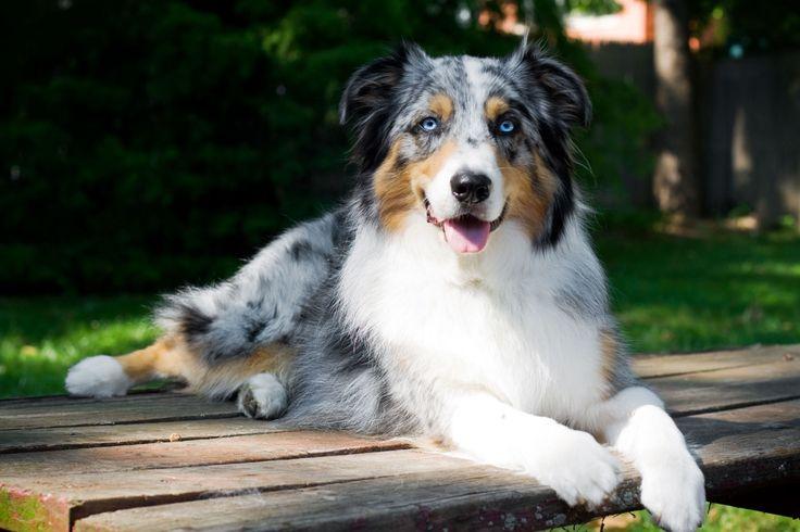 25 Top Medium-Sized Dogs