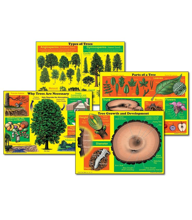 17 best nature science visual aids images on pinterest understanding trees bulletin board set fandeluxe Gallery