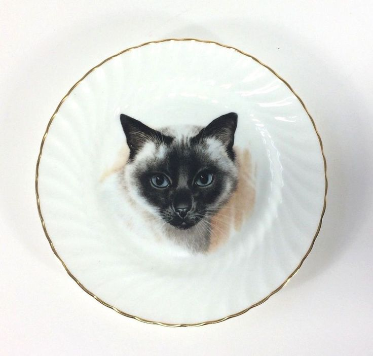 Royal Staffordshire Bone China Cat Plate England Siamese Cat VTG Gilt Edge 16 cm #RoyalStaffordshire