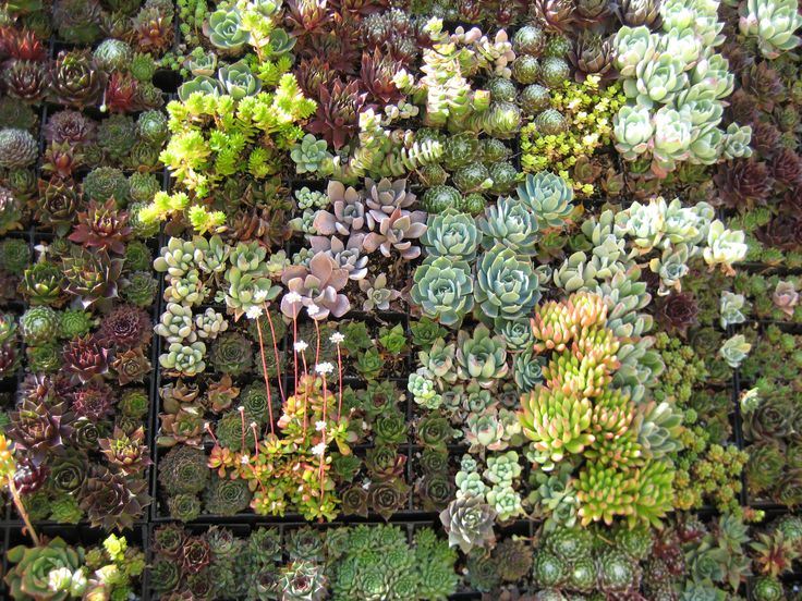 The Variety Of Succulents On This Wall Planter Is Amazing