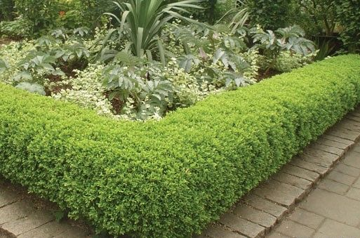1000 Images About Perennials Zone 5b On Pinterest
