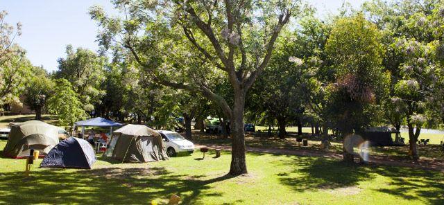 Camping delight - Berg River Resort, Paarl.