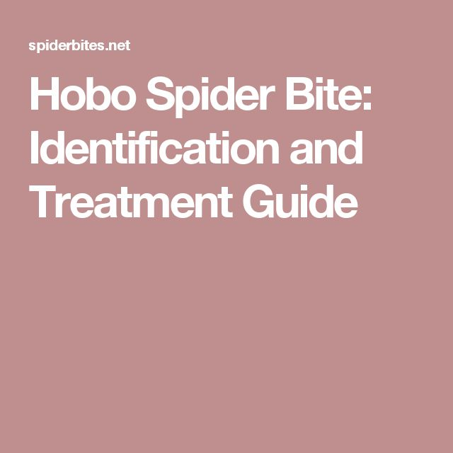 Hobo Spider Bite: Identification and Treatment Guide