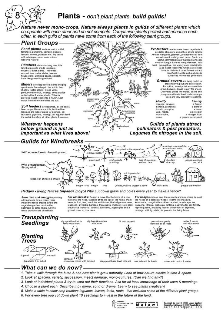 162 best High Desert Permaculture images on Pinterest ...