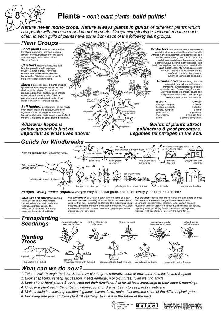 Melhores Imagens Sobre Plant Guilds No   rvores