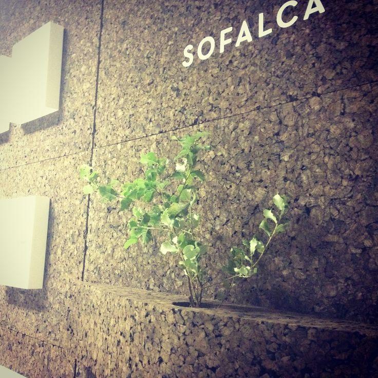 Our partner! Sofalca