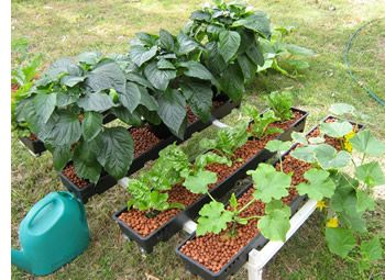 17 best images about hydroponics and aquaponiccs on for Indoor gardening nutrients