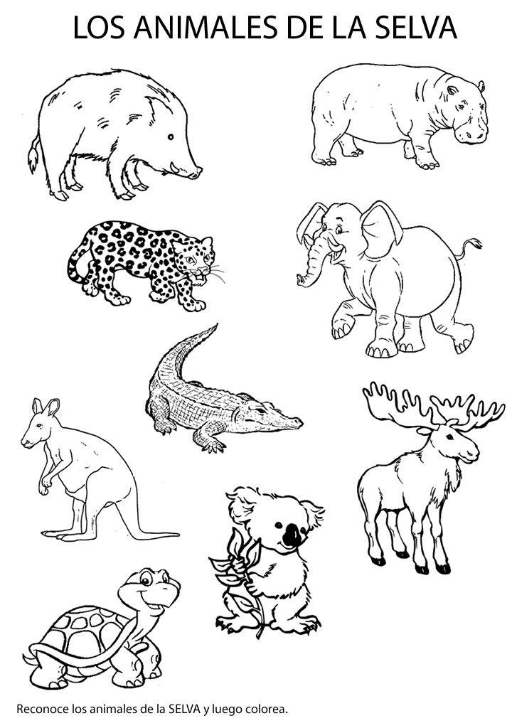 Imagenes de animales de la selva para colorear selva - Dibujos para la pared ...