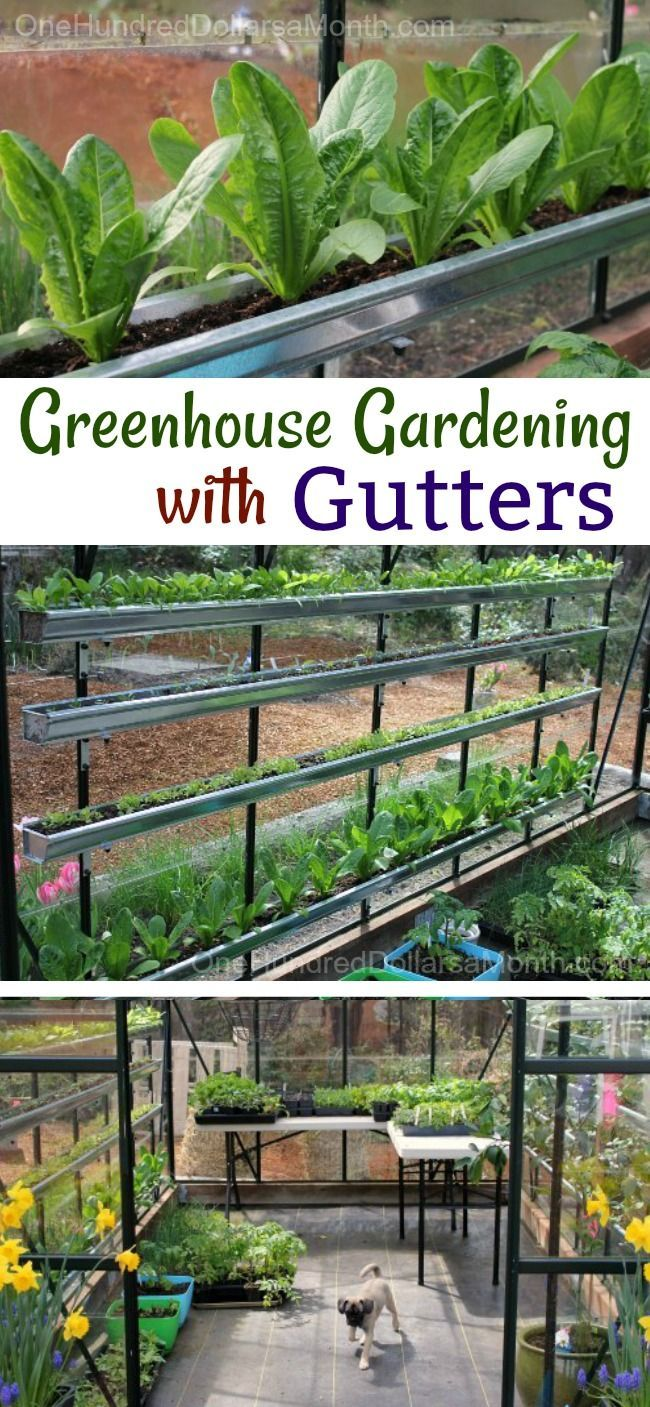 How To Grow Vegetables In A Greenhouse Lettuce Spinach Tomatoes Basil And More Greenhouse Gardening Home Vegetable Garden Tomato Garden