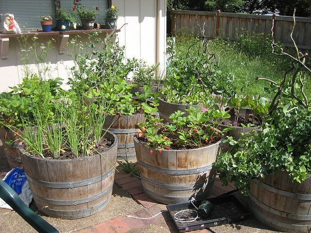 container vegetable gardening | Container Vegetable Garden | Flickr - Photo Sharing!