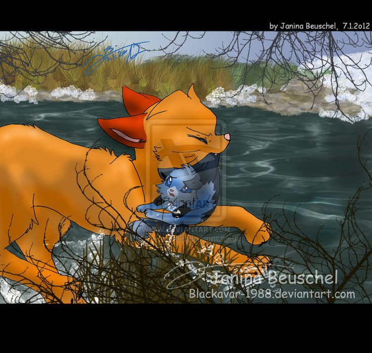 146 Best Images About Warrior Cats On Pinterest