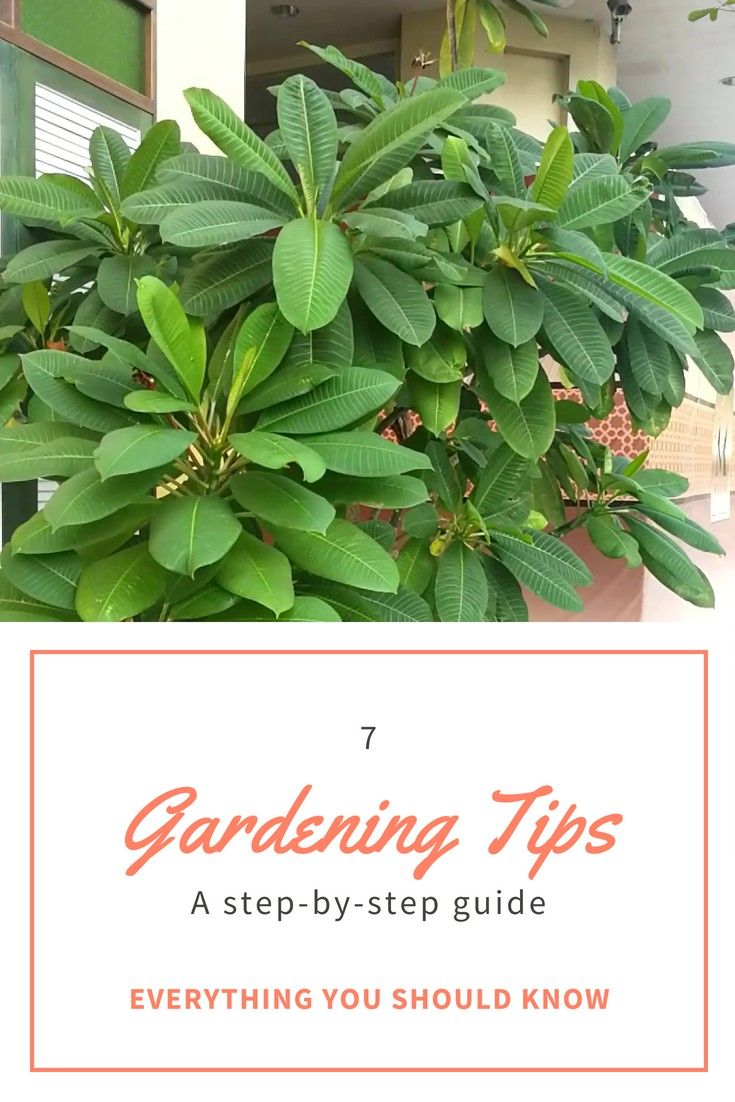 Container Gardening – Grow A Successful Garden By Following These Hints – Dom