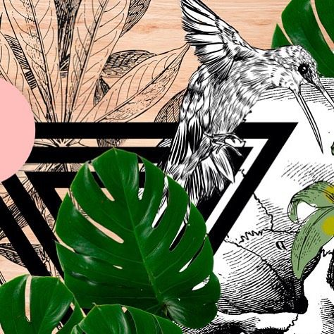 Sharing a slice of a larger piece of work created for this year's Falls Festival (Lorne). Combining my ink with old world ink and photographic collage - under the art direction of @bon_voyage_etoffe #fallsfestival #lorne #falls #music #festival #gig #ink #collage #mixedmedia #illustration #design #hummingbird #bird #palm #lush by mcdrawn http://ift.tt/1IIGiLS