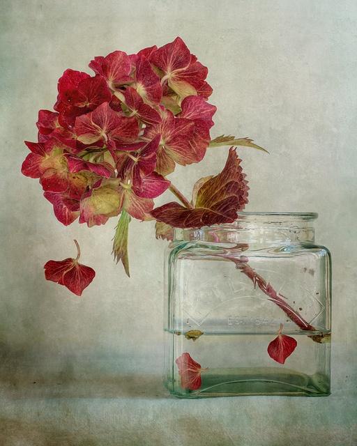 'Hydrangea' by Mandy D.